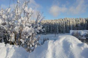 Eisenbach-2020-2021-Winterlandschaft-Winter-Busch