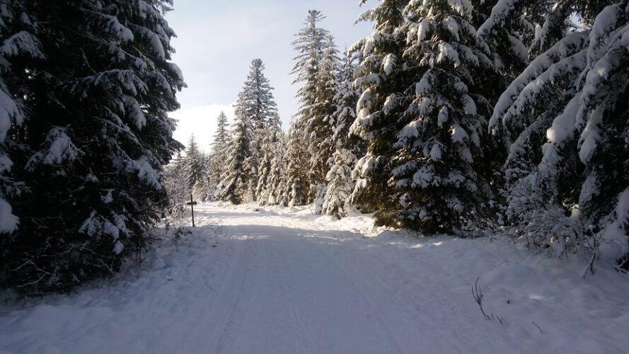 Eisenbach-2020-2021-Winterlandschaft-Winter-Wald