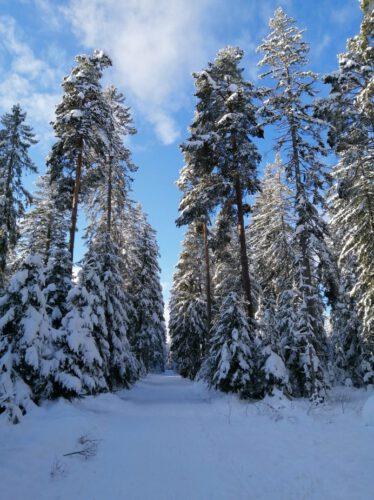 Eisenbach-2020-2021-Winterlandschaft-Winter-Wald-Hochformat